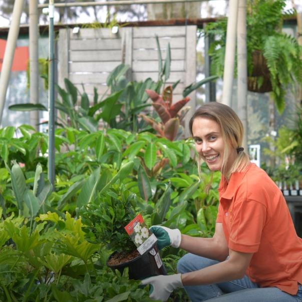 Flower Power Australia S Leading Garden Centre