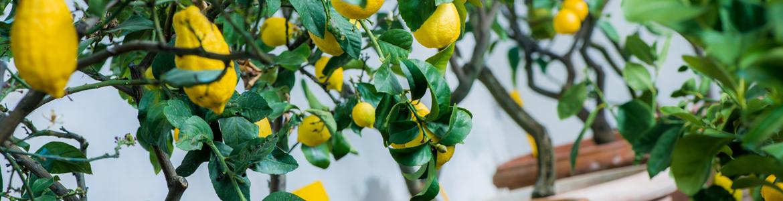 Growing Dwarf Fruit Trees | Flower Power