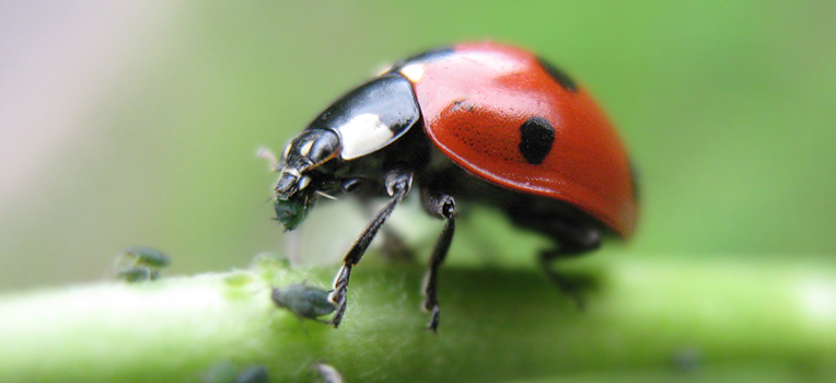Organic insect and disease control