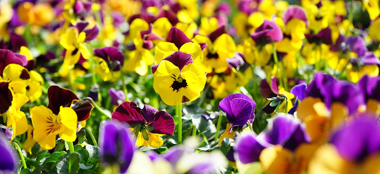 Colourful plants that brave winter