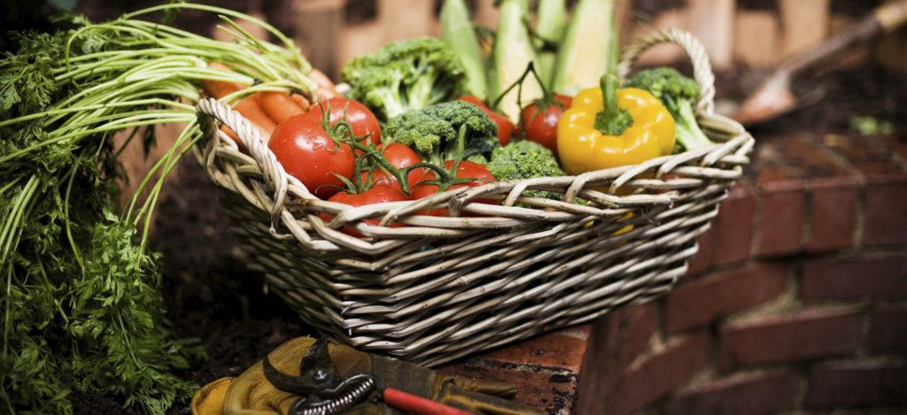 Vegatables in a basket outside by garden.