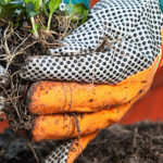 Soil testing explained