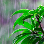 How to Restore Your Plants After Heavy Rain