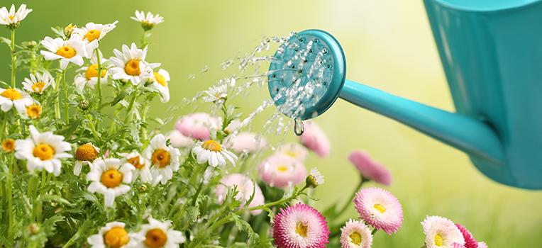 Managing Plant Heat Stress