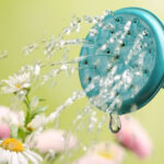A note from your plants on watering