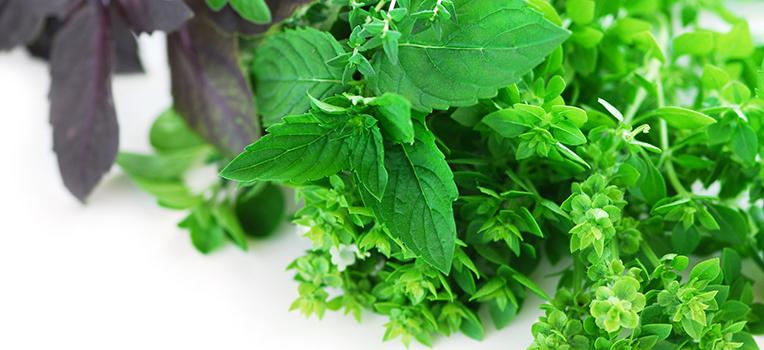 Beyond basil – how to grow & use fresh herbs