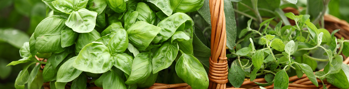 Beyond basil – how to grow & use fresh herbs