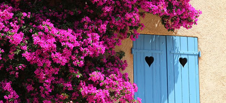 https://www.flowerpower.com.au/wordpress/wp-content/uploads/2016/01/20125730/Bougainvillea-with-blue-door.jpg