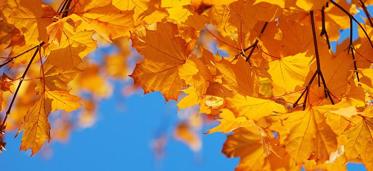 Colourful Autumn Plants