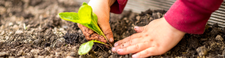 Gardening Fun for Kids