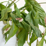 What's wrong with your indoor plant?