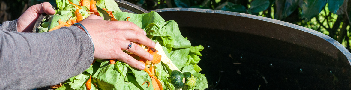 A beginner's guide to composting