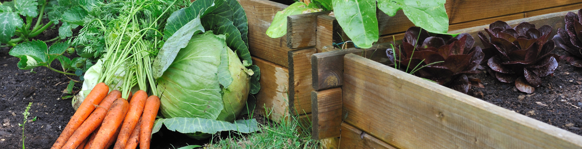 Vegetable growing basics
