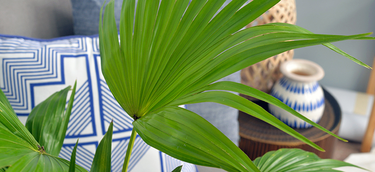 8 secrets to a happy indoor palm