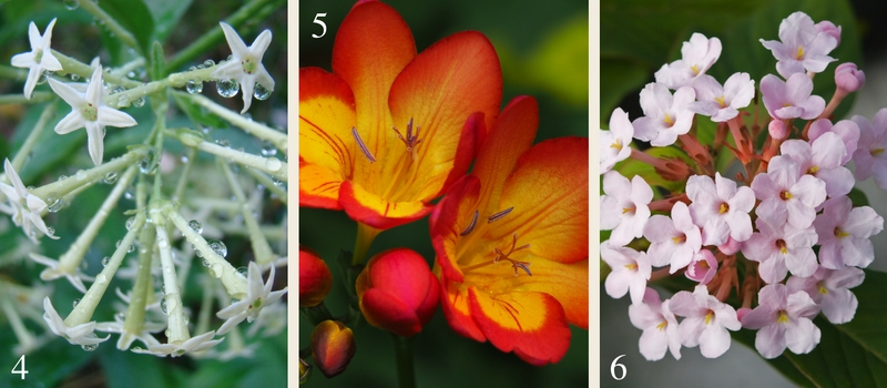 21 plants for a fragrant garden