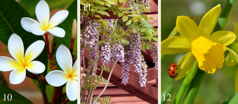 21 fragrant plants for your garden