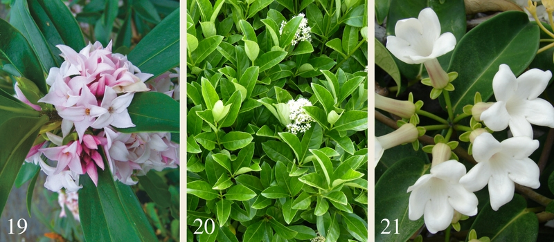 21-plants-for-a-fragrant-garden