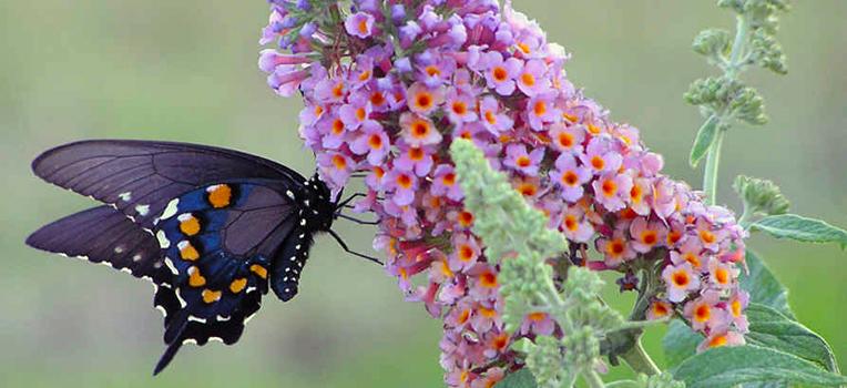 21 plants for a fragrant garden