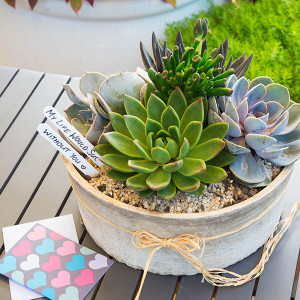 Living Trends Succulent Bowl