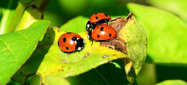 Good & bad garden bugs