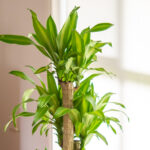 5 big and beautiful indoor plants
