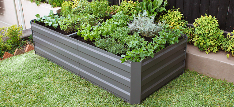 Growing herbs and vegies in a raised garden bed