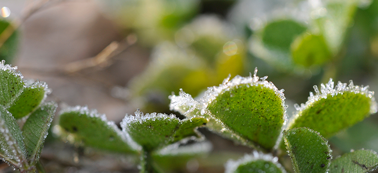 Helping plants cope with winter