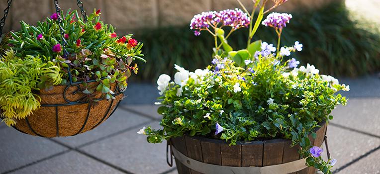 Using perennials to create a colourful display