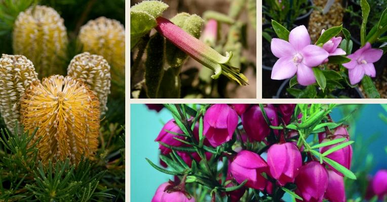 Colourful winter plants