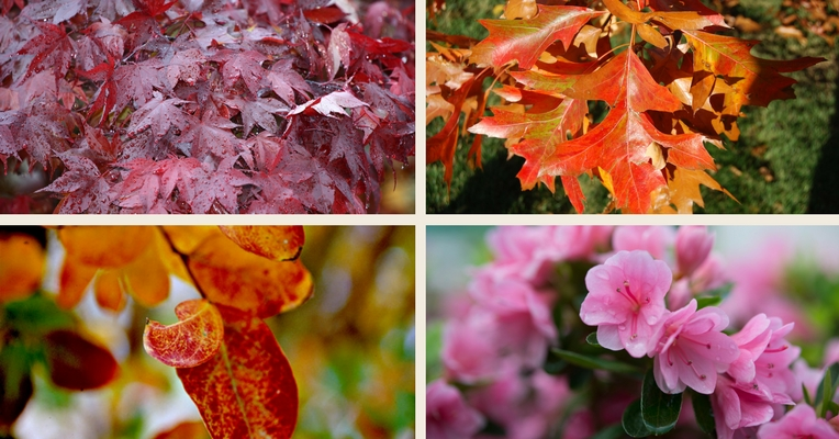Colourful winter plants
