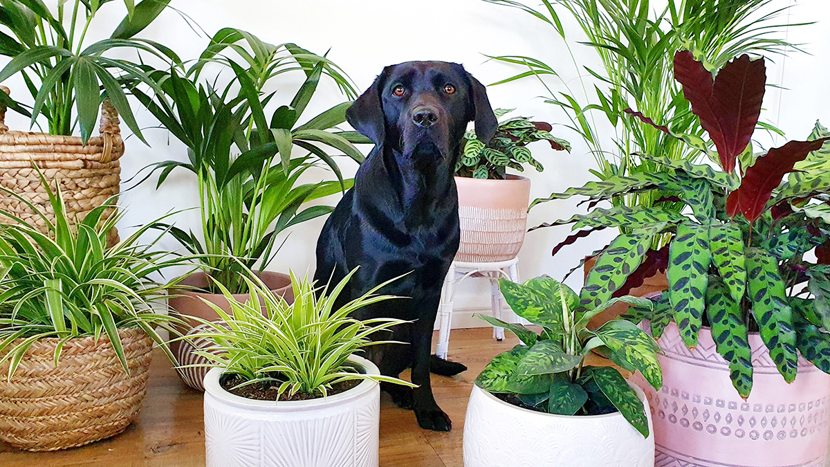 16 Pet Safe Indoor Plants Flower Power