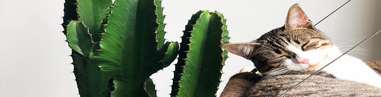 16 pet-safe indoor plants