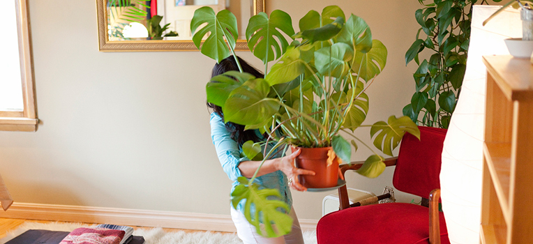 14 plants that like to holiday indoors