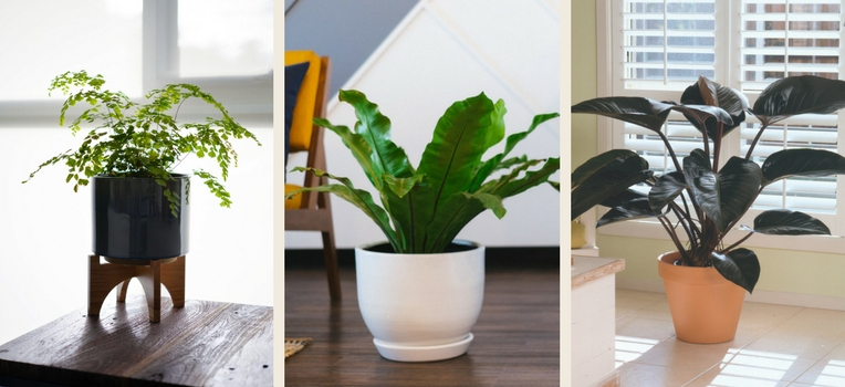 indoor outdoor plants