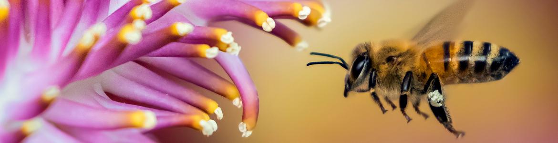 Bee-attracting blooms