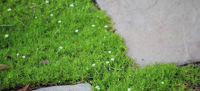 Best lawn alternatives