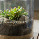 Caring for your Living Trends terrarium