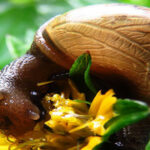 Summer pests & diseases checklist
