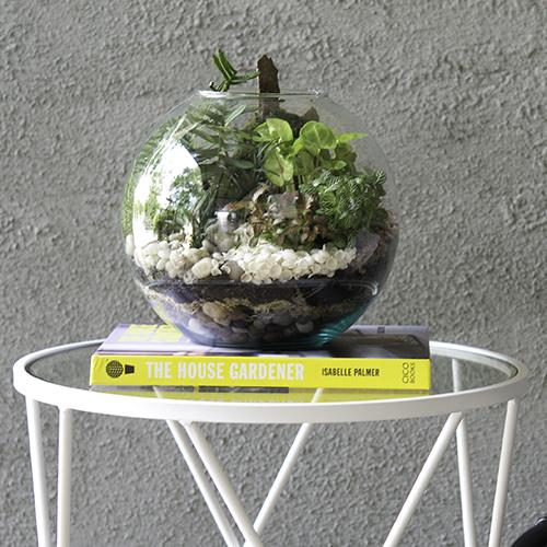 terrarium care
