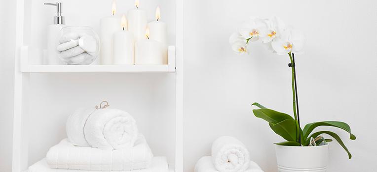11 best bathroom plants