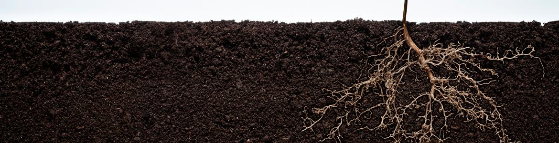 Understanding root systems