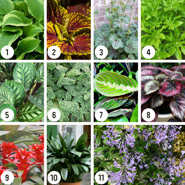 Shade Plants For Small Gardens Flower Power