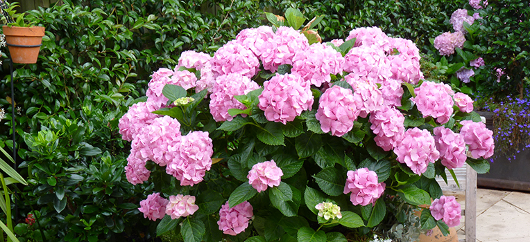 Shade plants for small gardens