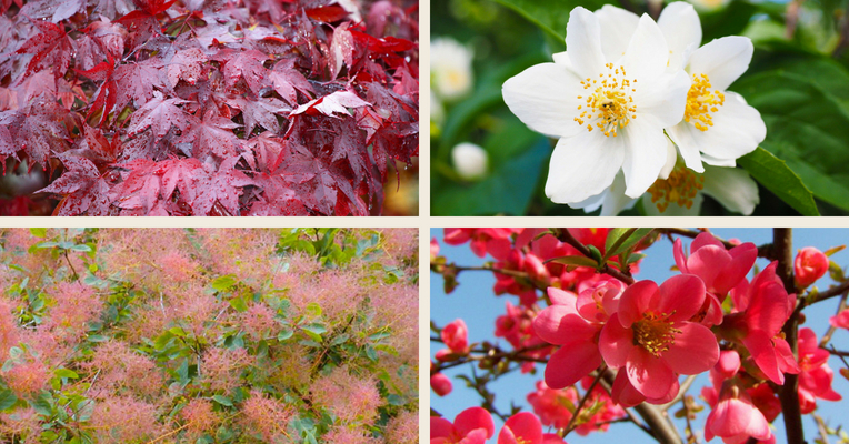top cool climate plants