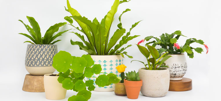 The 3 secrets to keepingindoor plants happy