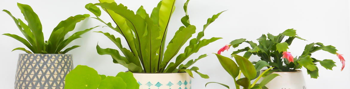 The 3 secrets to keeping indoor plants happy
