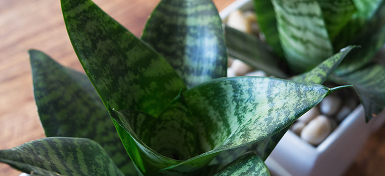 How to grow indoor plants in low light