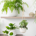 Indoor plants: our top picks (with pots to match!)