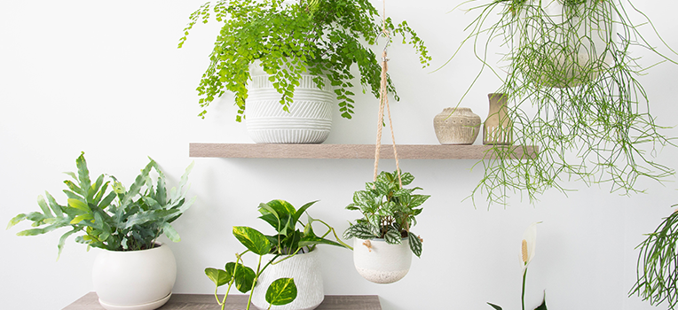 Indoor Plants Our Top Picks With Pots To Match Flower Power