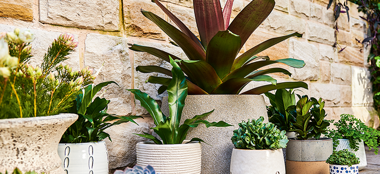 Container gardening: our top picks